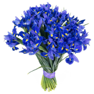 Ирис синий