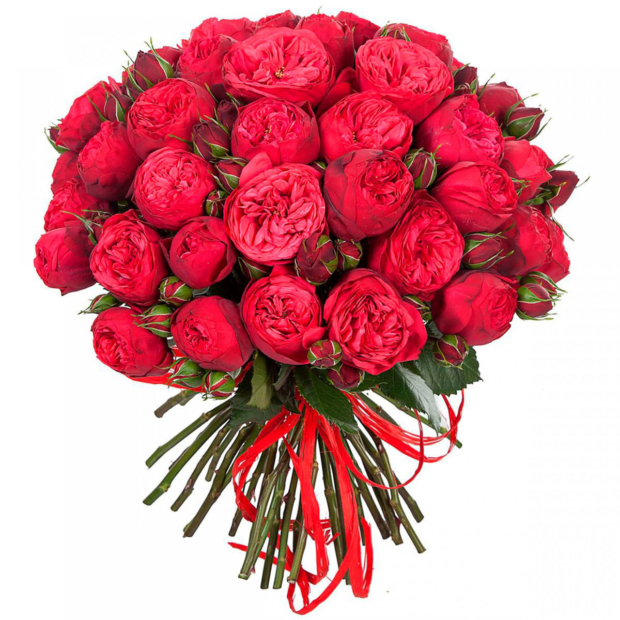 Розы Пионовидные красные