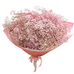 Гипсофила розовая