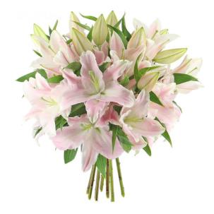 Лилия светло розовая